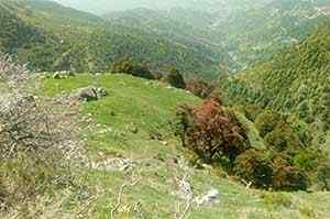 Landscape Triund Trek